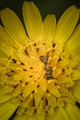 Pollen Bath