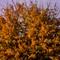Autumn Tree @ ISO 1600 Web