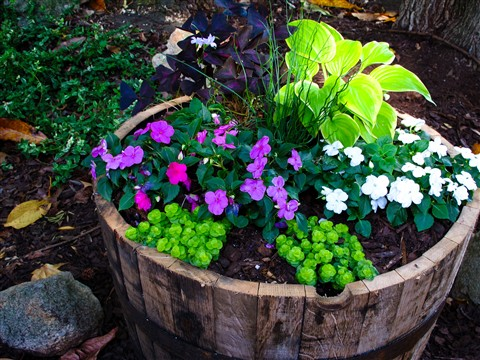 Whiskey Barrel Planter Scott Lavender Galleries Digital
