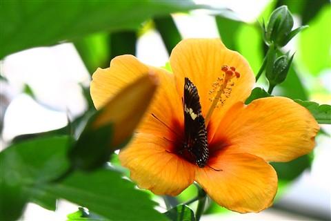 Butterfly_Mainau_Konstanz_050