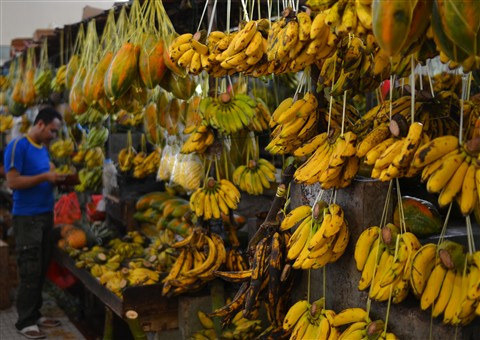 Hanging Fruits