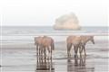 Horses by Sea