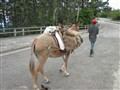 taking the donkey for a walk