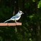 20110628_Blue_Jay_bird_picnic_table_shutter_speed_motion_118_iPad
