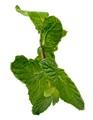 Mint-leaves