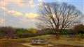 A Tree at Dusk