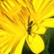 Garden_macros_07_2021_057