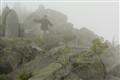 Fog  Hiker