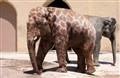 Giraphant