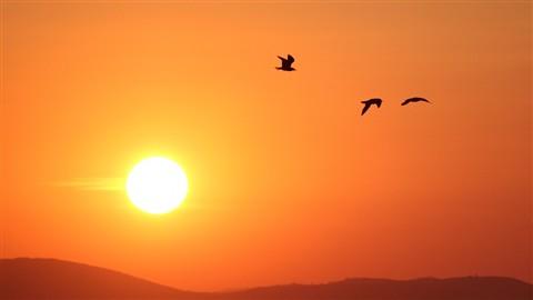 Sun+Seagull_2_m