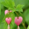 Bleeding Hearts 2