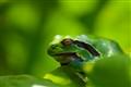 Froggy farniente