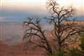 Lone Tree - The Grand Canyon
