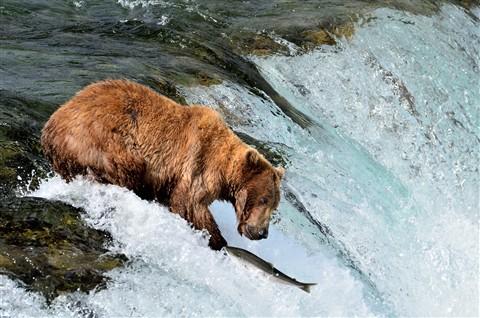 Alaska2012_D136_eds