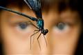 Captured dragonfly