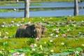 Water Elephant