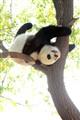 Plunging Panda