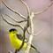 backyard birds-1