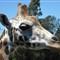 New Zealand Zoo