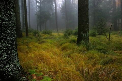 IMGP7942 Wald 5