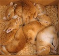 Baby buns in a box