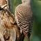 Pine River Park Birds-20160605-0067-Edit