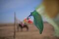 Linen prayer flags fly on the Mongolian prairie.