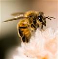 Bee #324 (1 of 1)