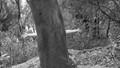 Tree huggin' hippie