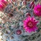 A Blooming Pincushion