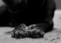 These Old Paws
