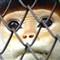 caged-1
