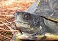 Turtle Glare