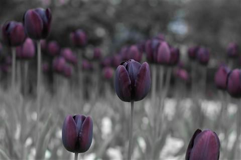 Botanic and Ormeau May 2012.-24