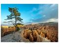 Lone Pine - Bryce Canyon