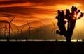Windmills by Joshua Tree, Mojave Desert, California