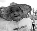 Thai Rice Farmer