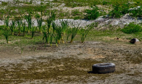 Tires in a retention pond