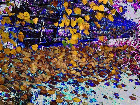 Leaf-fall1L