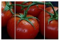 Triptych Tomatoes