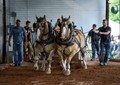 Draft Horse Pull Competition, Massachusetts.