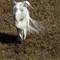 hqburst egret head 12-18-13 full 188  (1 of 1)