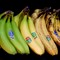 Banana Evolution