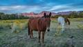 Brown Mule-5226