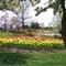 Tulip Time 15