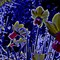 Flower - Daft Daffs