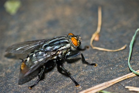 big fly 1