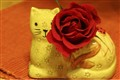 Yellow Cat with Rose