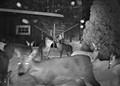 Zombie Deers II