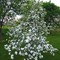 Apple tree best ever